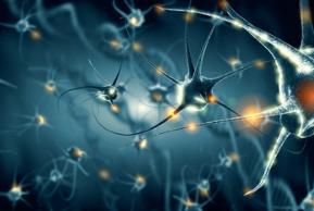 Le frontiere recenti della neuroscienza